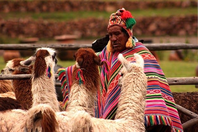 a peruvian indian with his alpaca